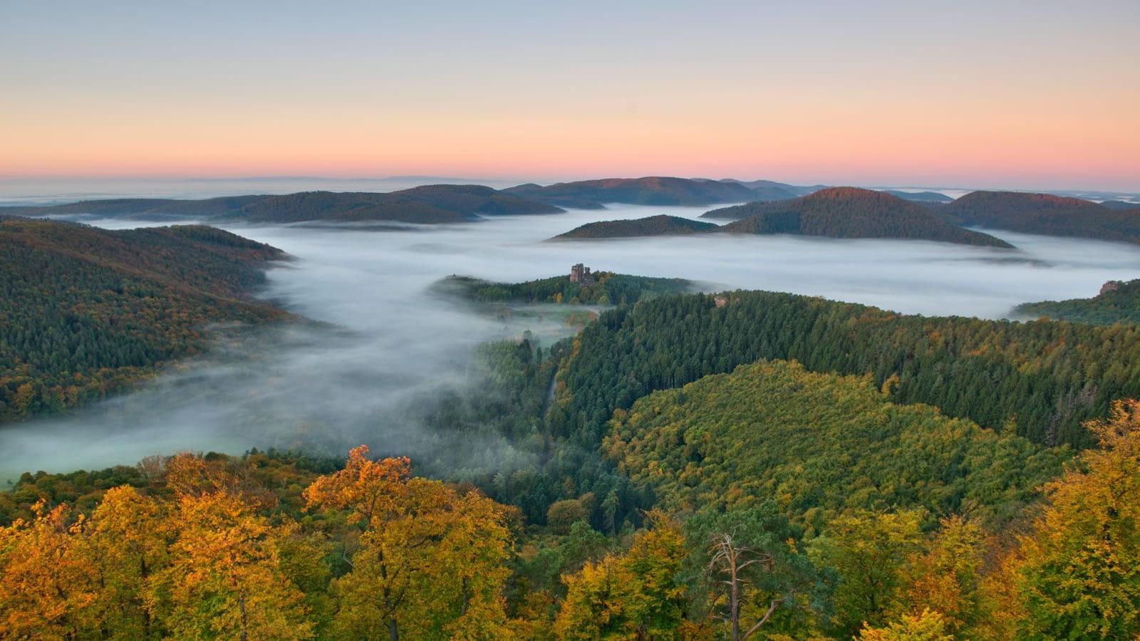 Forêt dans la brume - Fleckenstein Vosges du nord
