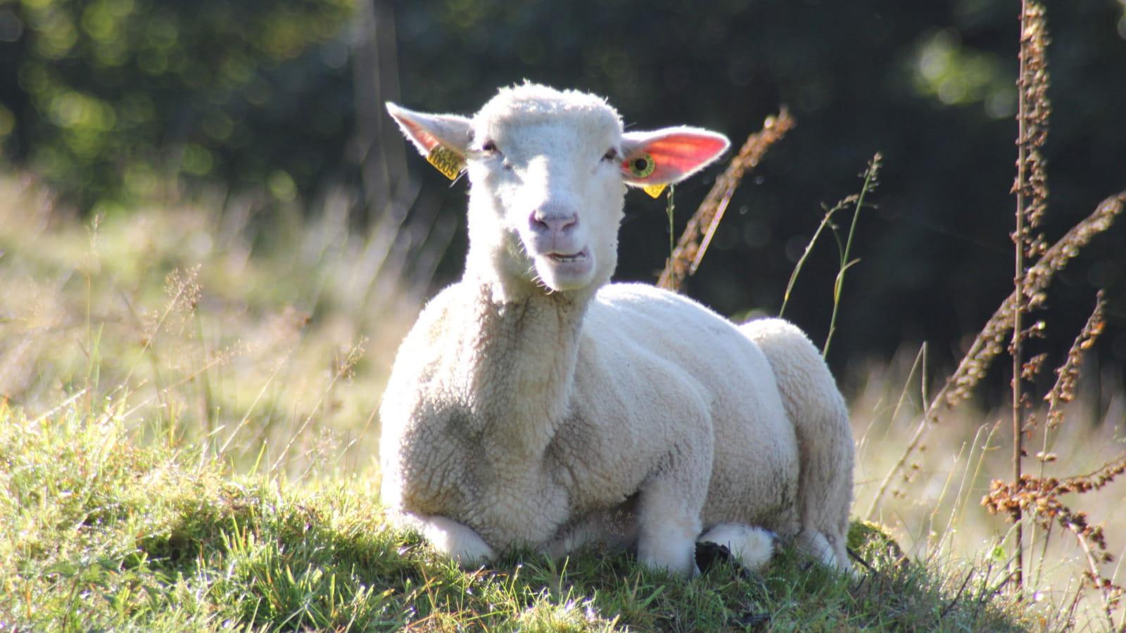Jouer à saute-mouton