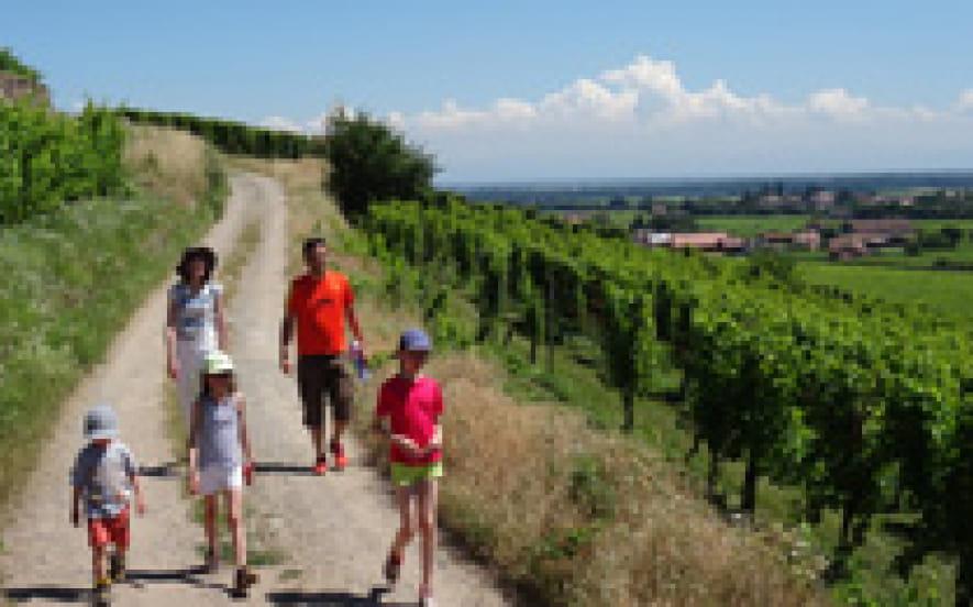 Château, plaine d'Alsace et Vignobles