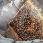 Restaurant La maison de l'abeille et du Pain d'épices