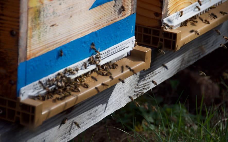 Le rucher du Luttenbach