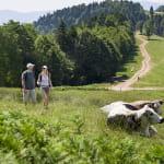 Randonnée Ballons et Vignobles d'Alsace