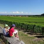 Balade famille - Château et vignoble