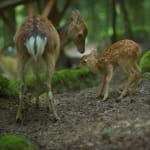 Parc Animalier de Fougerolles-Saint-Valbert