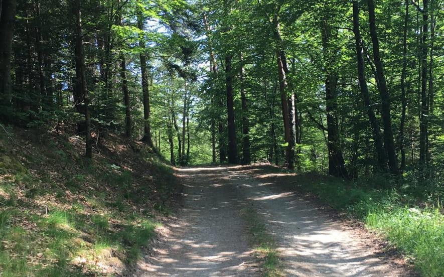 Sentier poussette du Climont