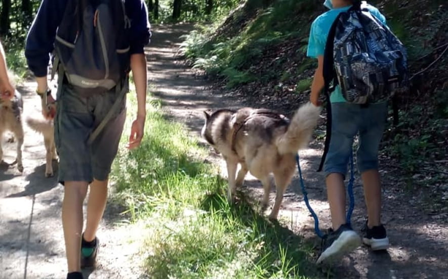 Manouk Evasion, cani-marche