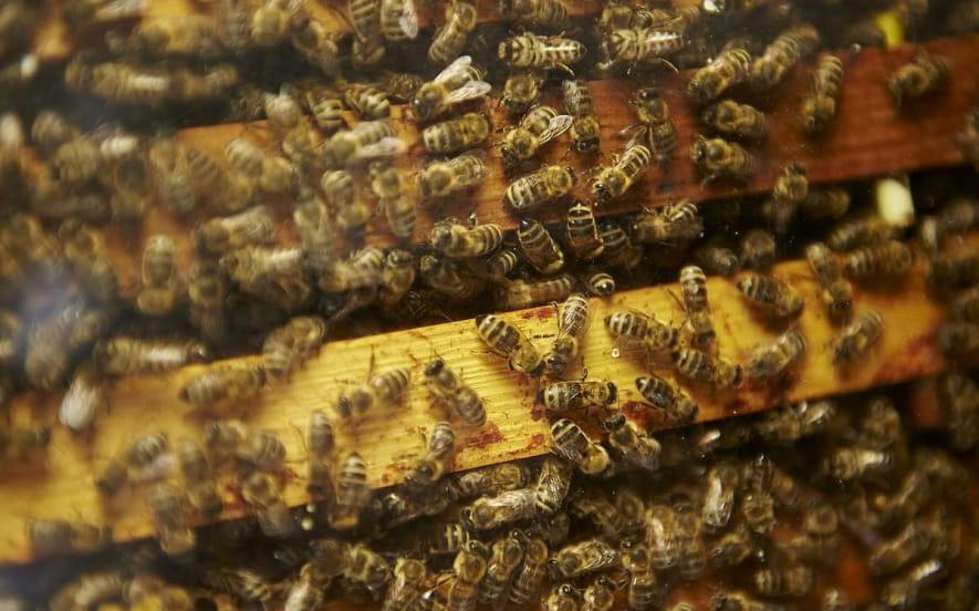 Association des apiculteurs de la haute vallée de la Bruche