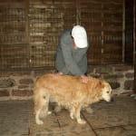 Rééquilibrage des énergies (chevaux et chiens)