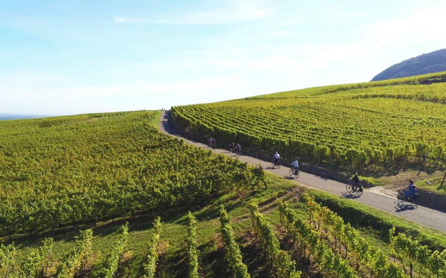 Colmar Bike Tours - Visite guidée à vélo électrique