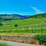 Mobilboard Obernai - Coeur d'Alsace