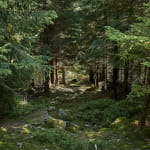 La forêt domaniale du Donon