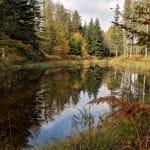 Itinérance aux 1000 étangs