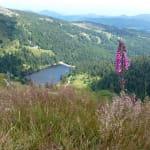 Le Parc naturel regional des Ballons des Vosges