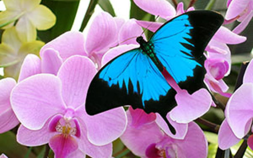 Jardins des papillons