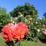 Ah ! le beau jardin