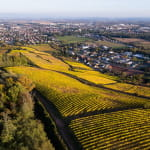 Le sentier viticole Côte 425