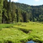 L'étang du Devin