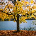 Réserve Naturelle du lac de Lucelle