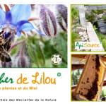 LE RUCHER DE LILOU - APISOURCE