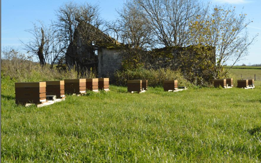 L'abeille des mille étangs