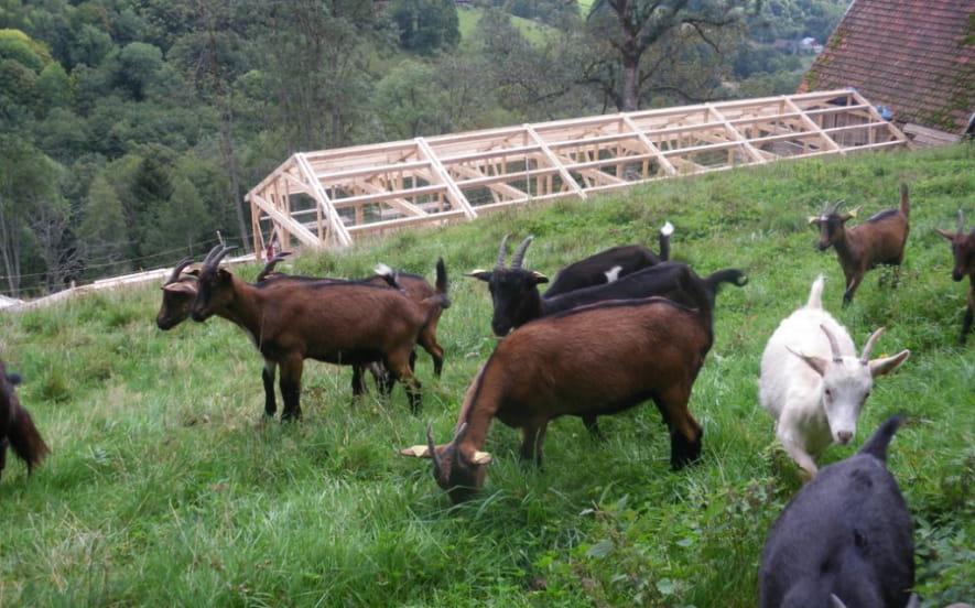 Régalades à la ferme dans la Vallée de Munster