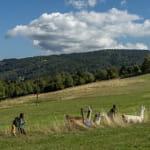 Charbo-loisirs : Balades avec des lamas et des ânes