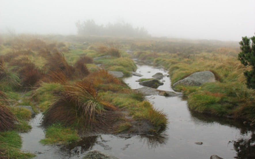 Réserve Naturelle du Tanet - Gazon du Faing