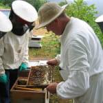 Producteur de miels Maisset