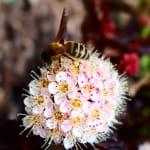 Producteur de miels Cunin