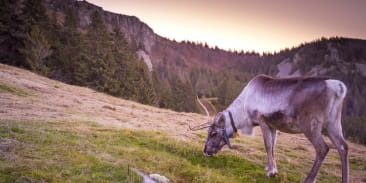 Ferme aux rennes du Schantzwasen