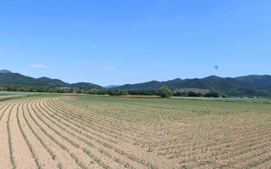 Vue sur le vignoble du Rangen