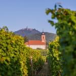 Les mystères du vignoble : Orschwiller