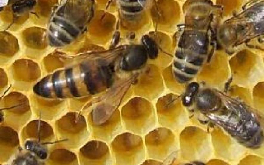 Le rucher du Rollenberg