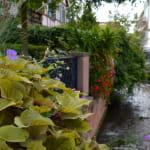 Balade entre toits et jardins