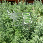 Jardin Secret de la Fée Verte